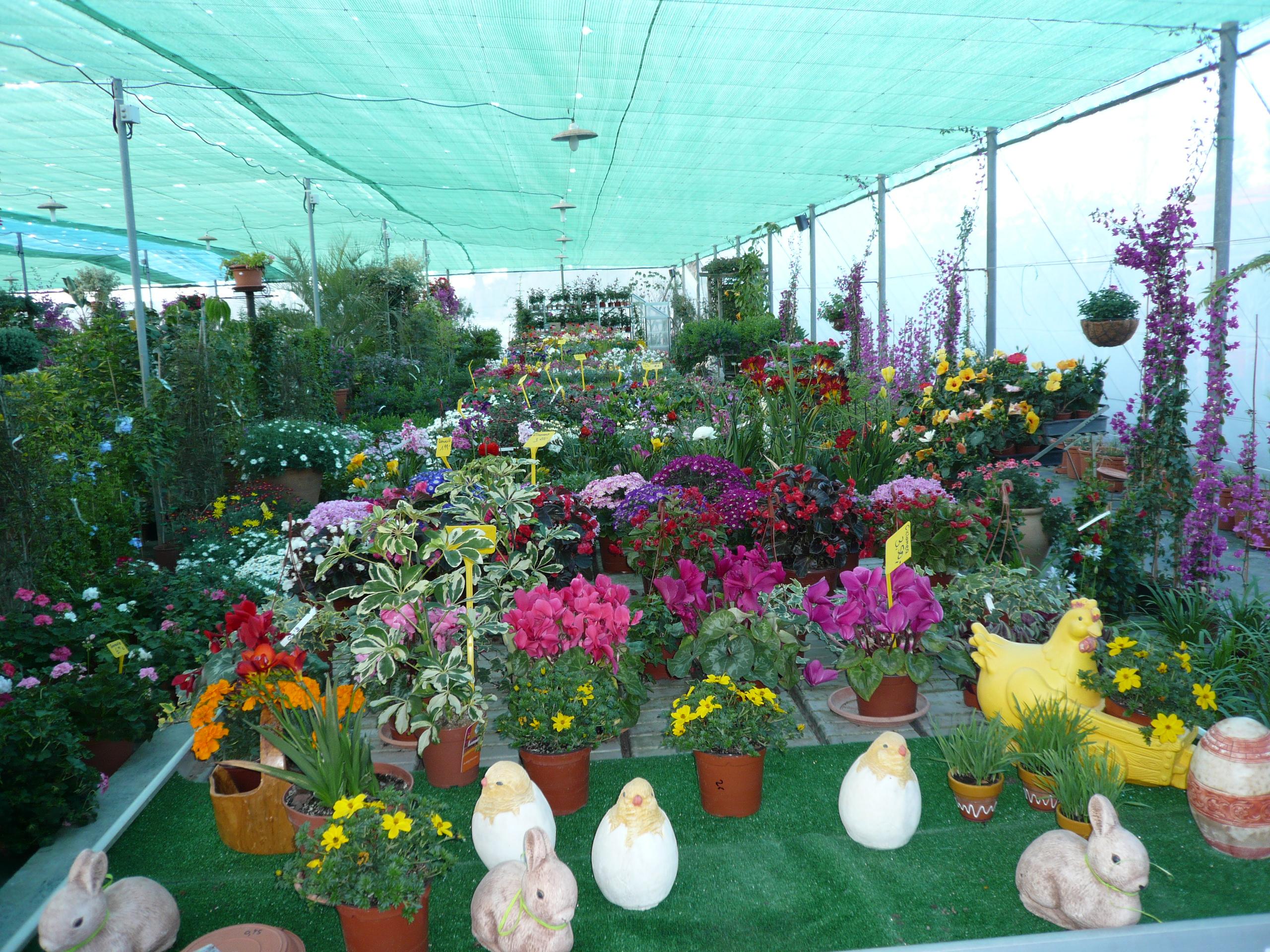 Jardiner a monteazahar los montesinos jardiner a for Todo para viveros